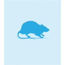 Frozen Rats Fuzzies 15-25g